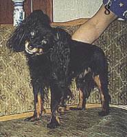 Бланки Родословной Собаки